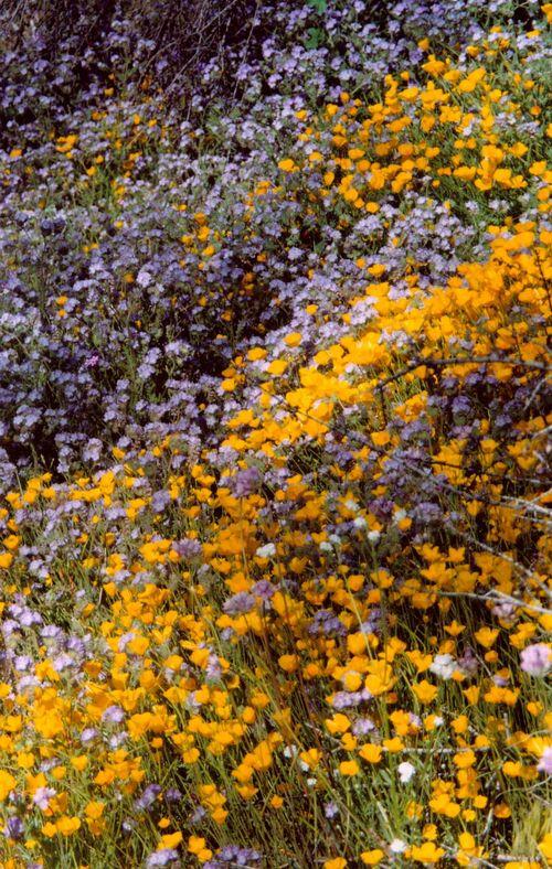 Kern flowers_1