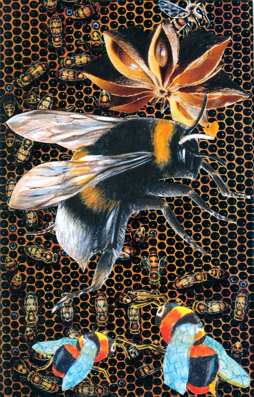 Sc-bee-extinction