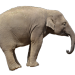 Elephant-1049838__340