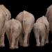 Elephant-1049840__340