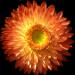Italicum-1563573__340