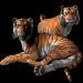 Tiger-2099824_960_720