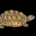 Turtle-1698966__340