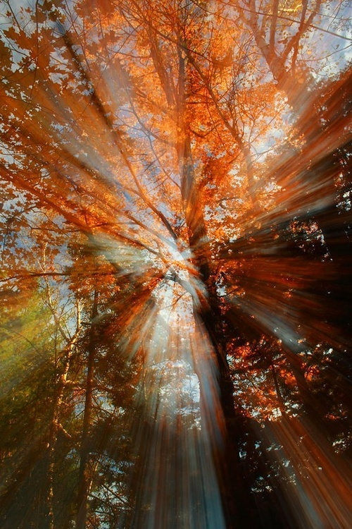 Dreamy-Autumn-Morning