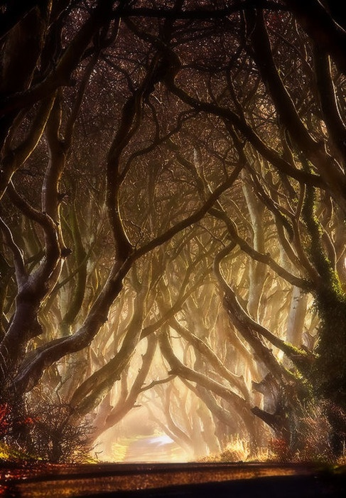 The-Dark-Hedges-Ireland